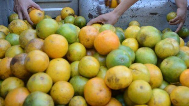Citricultores protestan contra importación de naranja contaminada