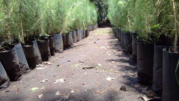 1f81da749e Con 400 mil plantas reforestarán ejidos afectados por incendios